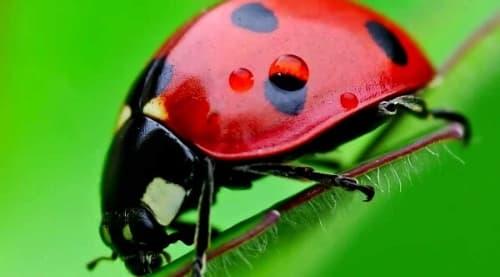 Animal Invertebrado