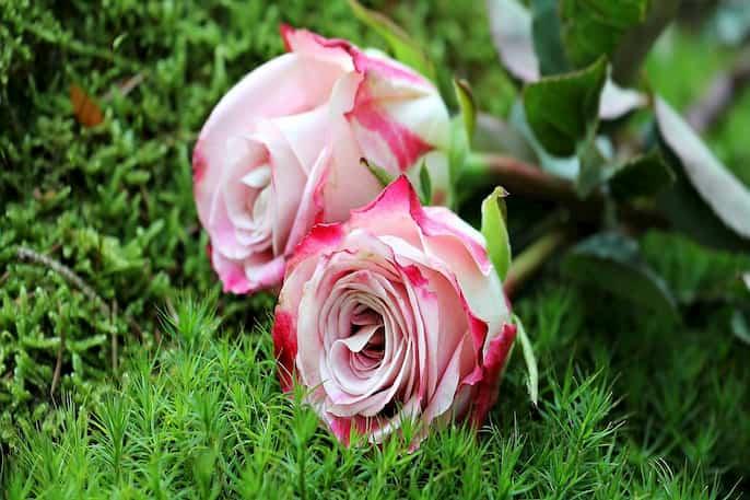 Las Flores más Populares