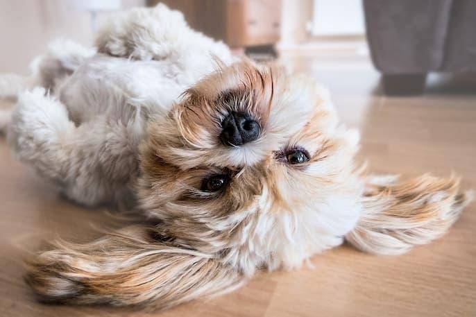 quitar el el olor de perro