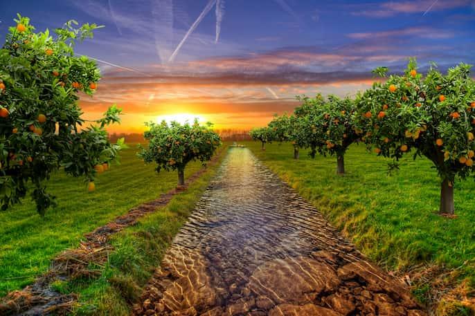 árbol frutal