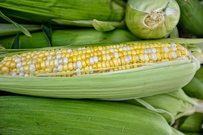 Raíz de maíz