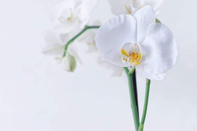 cuidar una orquídea