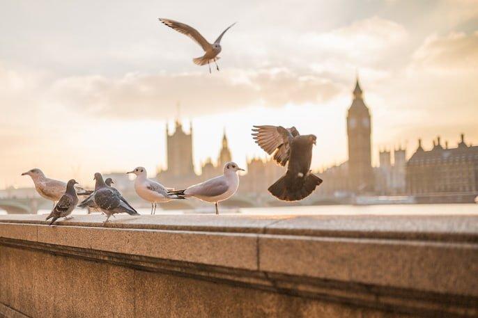 excrementos de pájaros