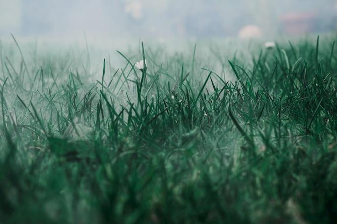 mancha de hierba