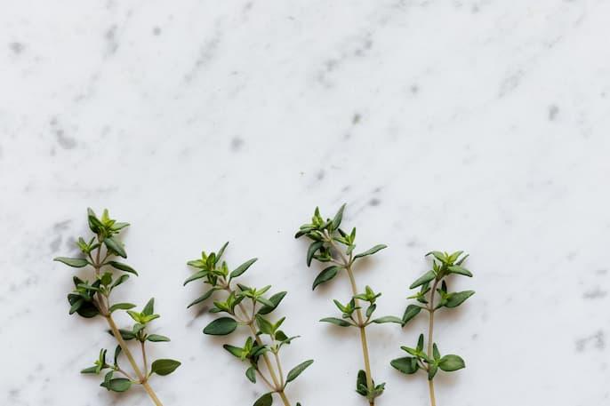plantas que aumentan la inmunidad